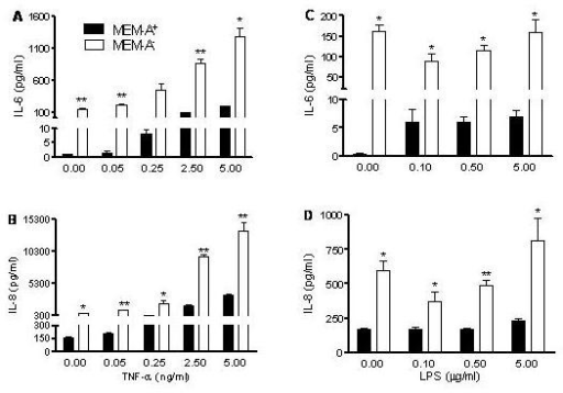 Hyper-responsive IL-6 (A, C) and IL-8 (B, D) production by NCI-H292 cells maintained in MEM without arginine. Cells were plated and, after overnight culture, exposed for 20 h to fresh medium (MEM plus L-glutamine and arginine (MEM-A+) or MEM with L-glutamine only (MEM-A-)) to a concentration range of TNF-α (A, B) and LPS (C, D). Typical experiment is shown out of three experiments (triplicate samples; mean ± SEM). *P < 0.05, **P < 0.01 and ***P < 0.001 as compared to MEM-A+.