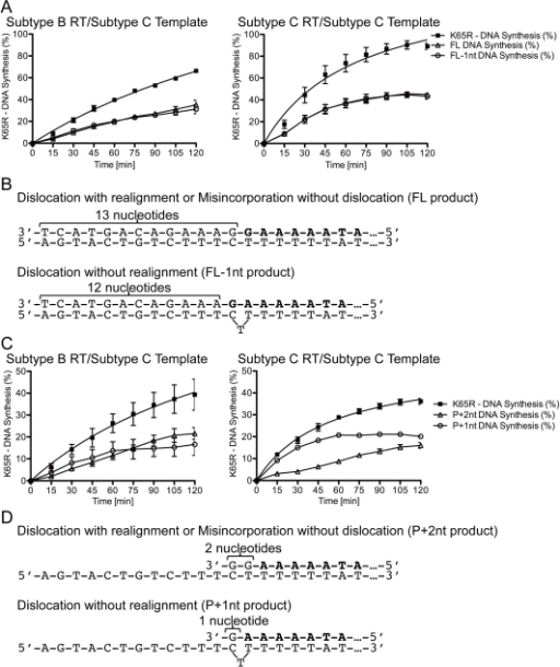Evaluation of the dislocation products in the various subtype C primer/template conditions.(A) Graphical representation of K65R-containing transcript production with primers already harboring the mutagenic nt. Left: K65R production with subtype B RT on the subtype C template. Right: K65R production with subtype C RT on the subtype C template. The product of dislocation without realignment (FL-1nt product) is depicted as empty circles and the products of dislocation with realignment or misincorporation without dislocation (FL product) are depicted as empty triangles. When the mutagenic nt is already incorporated into the primer strand, the amount of FL and FL-1nt products is identical. (B) Schematic of the dislocation without realignment (FL-1nt) and the dislocation with realignment or misincorporation without dislocation (FL) products with the primer strand already containing the mutagenic nt. The sequence of the unextended primer is depicted in bold. (C) Graphical representation of K65R-containing transcript production with dGTP incorporation at the site of K65R development. Left: K65R production with subtype B RT on the subtype C template. Right: K65R production with subtype C RT on the subtype C template. The product of dislocation without realignment (P+1nt product) is depicted as empty circles and the products of dislocation with realignment or misincorporation without dislocation (P+2nt product) are depicted as empty triangles. During the process of incorporation of the mutagenic nt, the amount of P+1nt product reaches a maximum at 60 min whereas the amount of P+2nt product continues to rise steadily beyond 60 min. (D) Schematic of the dislocation without realignment (P+1nt) and the dislocation with realignment or misincorporation without dislocation (P+2nt) products during dGTP incorporation at the site of K65R development. The sequence of the unextended primer is depicted in bold.