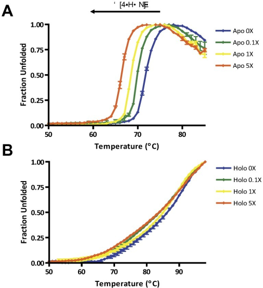 Adduction affects protein stability only when in the apo form.Thermal denaturation of apo and holo native and 4-HNE treated protein revealed differences in stability profiles. (A) The stability of apo rL-FABP decreases in a 4-HNE concentration dependent manner. (B) Holo rL-FABP thermal stabillity is only moderately affected by 4-HNE adducts. Blue - 0X 4-HNE (0 µM); green - 0.1X 4-HNE (4.93 µM); yellow - 1X 4-HNE (49.26 µM); orange - 5X 4-HNE (246.31 µM).
