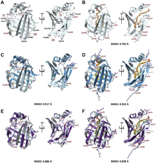 "Molecular modeling simulations reveal minimal conformational changes in both apo and holo L-FABP as a result of peripheral 4-HNE adducts.Native apo (A) and holo (B) L-FABP is shown as the grey ribbon structure, ""open chain"" 4-HNE adducts and HA 4-HNE structures are shown as overlays over native protein, in blue (C and D) and purple (E and F), respectively. All structures are shown as a ""front view"" and 90° turned ""side view"". Reference residues surrounding the three ligand portals are shown in black of the apo native structure and have been highlighted previously [62]. Root-mean-square deviation (RMSD) values were obtained comparing 4-HNE modified protein to the native. Residues found to be modified with 4-HNE are labeled in red, and are referenced in all protein structures. Docked LA is colored according to the 4-HNE adduction state: native  =  orange, 4-HNE  =  yellow, 4-HNE HA  =  green."