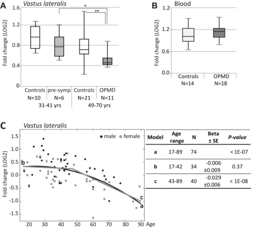 RT-qPCR analysis of PABPN1 expression trends in OPMD and during muscle aging(A) Box plot shows PABPN1expression in Vastus lateralis from expPABPN1 carriers at a pre-symptomatic (pre-symp) or symptomatic (OPMD) stages, and age-matching control groups. (B) Box plot showsPABPN1expression in blood form OPMD patients and controls. (C) Scatter plot shows PABPN1expression in 78 healthy controls age 17-89 years. Male and female samples are indicated in black and grey, respectively. A quadratic fit is shown with a black line (a), and linear fits are for the age groups: 17-42 years (b) or 43-89 years (c) are denoted in grey. The table summarizes p-values and Beta ± standard errors, which were calculated after gender correction. Fold-changes were calculated after normalization of GUSB housekeeping gene and to control group age 17-22 years (A, C) or age matching controls (B). N denotes the number of samples in each group.