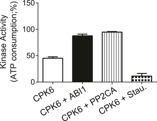 CPK6 kinase activity is not inhibited in the presence of ABI1 or PP2CA.In vitro protein kinase assays measuring the kinase activity via ATP consumption show that staurosporine (Stau.) but not ABI1 or PP2CA inhibited CPK6 kinase activity. The increased ATP-consumption signal in the presence of ABI1 and PP2CA can be explained by higher ATP consumption triggered by kinase auto-phosphorylation of residues removed by the PP2C protein phosphatases. Data shown represent the mean of three experiments ± SD.DOI:http://dx.doi.org/10.7554/eLife.03599.012
