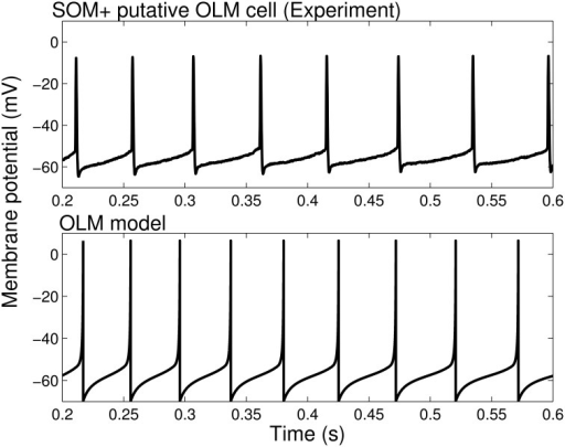 Firing rates and spike characteristics of SOM+ interneuron model closely matches experiment An example intracellular recording of a SOM+ cell during current clamp with applied current of 61 pA (top) is compared with the firing of our SOM+ cell model with an applied current of 61 pA (bottom). The spike characteristics and firing rates of the model closely match those of the experiment.