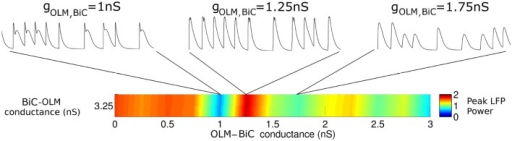 The interactions between OLM and BiC affect the network power in a complex manner. Here, a single BiC-OLM conductance (gBiC, OLM = 3.25 nS) is considered, whereas the OLM-BiC conductances varies, and representative LFP traces are shown. In these simulations, the populations were randomly connected with a probability of 0.19 for OLM-BiC connections, and 0.12 for BiC-OLM connections, and each cell type is connected to our passive PYR model with equal connection strength.