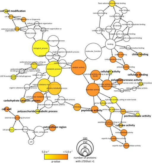 Network representation of gene ontologies (GOs) of proteins with sTEKhot >1 in S. borealis proteome. Nodes correspond to GOs are sized according to the number of proteins with sTEKhot >1. They are colored from yellow to orange according to the p-value of a hypergeometric test for enrichment in proteins with sTEKhot >1 compared to whole proteomes. White nodes are GOs not significantly enriched among proteins with sTEKhot > 1 (p>0.05). GOs labeled in bold font correspond to functions possibly associated with host interaction.