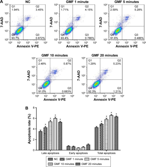 Effect of gyromagnetic fields on cell apoptosis in PC-3 cells.Notes: (A) Flow cytometry analysis using an Annexin V-PE/7-AAD Apoptosis Detection Kit on PC-3 cells 24 hours after treatment with a gyromagnetic field from the normal control (NC group) and the gyromagnetic field (GMF) groups with treatment times of 1, 5, 10, and 20 minutes. (B) Quantitative data of cell apoptosis rate by FlowJO (n=3). Cells in late apoptosis were both Annexin V-PE positive and 7-AAD positive (Q2), and cells in early apoptosis were Annexin V-PE positive and 7-AAD negative (Q3). *P<0.05 when compared with the NC group.
