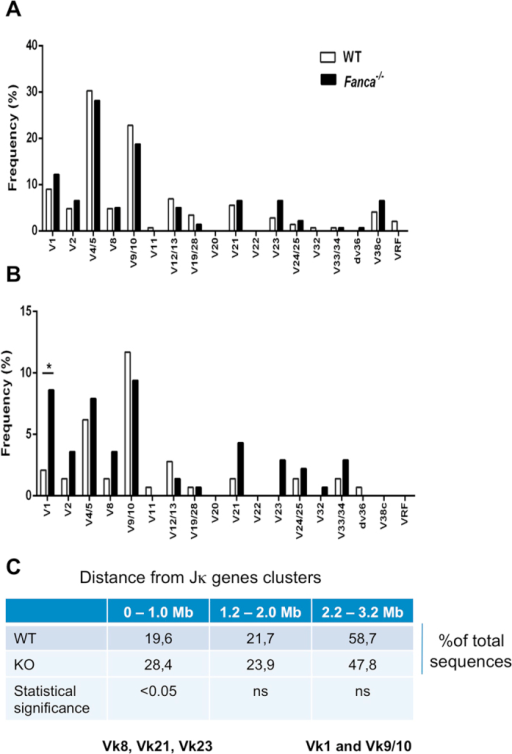 Fanca−/− mice displayed a skewed Vκ gene usage in in-frame Vκ-Jκ1 rearrangements in BM IgM- B cells.Analysis of Vκ gene family usage of total (A) and in-frame (B) Vκ-Jκ1 rearrangements amplified from genomic DNA isolated from BM IgM− B cells of Fanca−/− and WT mice (*p < 0.05 with Fisher's exact test). Vκ families are displayed according to chromosomal order relative to the Jκ genes cluster. The data are from four independent pools of four mice per genotype (numbers of analysed sequences are indicated in Table 1).