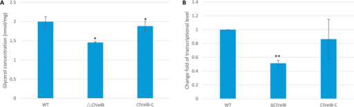 ClVelB regulates the glycerol accumulation.(A) Determination of glycerol biosynthesis in WT strain (CX-3), clvelB deletion mutant (ΔClVelB), and complemented strain (ClVelB-C). After the mycelia of WT, ΔClVelB and ClVelB-C were treated with 1.2 M NaCl for 2 h, the intracellular glycerol concentrations (nmol/mg dried mycelia) were tested. Untreated mycelia were used as the controls. The bars indicate the standard errors of the three repeated trails. (B) qRT-PCR analysis of gpd1, which is responsible for glycerol biosynthesis. A single asterisk indicates the p-value < 0.05 while double asterisks indicate the p-value < 0.001 in the T-test analysis.