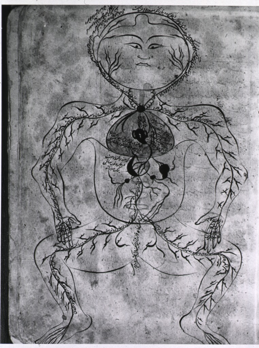 <p>Anatomical drawing of the circulatory system.</p>