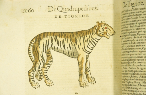 <p>Hand-colored woodcut of a tiger in profile.</p>