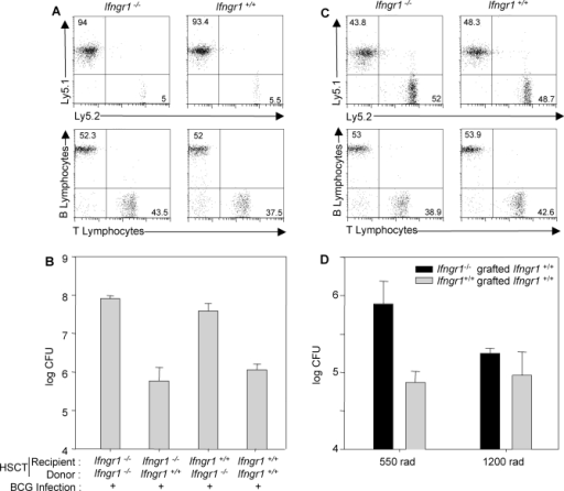 HSCT Restores Anti-Mycobacterial Immunity in Ifngr1−/− Mice(A) Ifngr1−/− and Ifngr+/+ mice (five animals per group) expressing the Ly5.2 marker were subjected to HSCT with bone marrow from Ifngr+/+ mice expressing the Ly5.1 marker, after intense irradiation (1,200 rads). Chimerism, assessed by determining the surface expression of Ly5.1 and Ly5.2 on lymphocytes, and peripheral reconstitution, assessed by determining the surface expression of TCRαβ and B220 markers on lymphocytes, were analysed by flow cytometry nine weeks after HSCT treatment.(B) Ifngr1−/− and Ifngr+/+ mice were subjected to HSCT with bone marrow from Ifngr1−/− or Ifngr+/+ mice. HSCT-treated mice were then infected with BCG and bacterial loads were determined 45 d later (five animals per group).(C) Ifngr1−/− and Ifngr+/+ mice expressing the Ly5.2 marker were subjected to HSCT with bone marrow from Ifngr+/+ mice expressing the Ly5.1 marker, after mild irradiation (550 rads). Chimerism and peripheral reconstitution were analysed by flow cytometry nine weeks after HSCT treatment.(D) Ifngr1−/− and Ifngr+/+ mice were subjected to HSCT with bone marrow from Ifngr+/+ mice after intense or mild irradiation, infected with BCG and bacterial load was determined 45 d later.