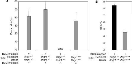 Rejection of the HSCT Graft in Ifngr1−/− Mice Previously Infected with BCG(A) Chimerism was determined by assessing the surface expression of Ly5.1 (donor cells) on lymphocytes, in Ifngr1−/− and Ifngr+/+ mice treated by HSCT with bone marrow from Ifngr+/+ mice, nine weeks post HSCT. Ifngr1−/− and Ifngr+/+ mice were infected with BCG either before or after HSCT (five animals per group).(B) Bacterial loads were determined after the treatment of Ifngr1−/− and Ifngr+/+ mice previously infected with BCG (three animals per group), by HSCT with bone marrow from Ifngr+/+ mice.