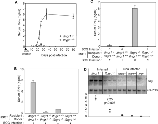 HSCT Graft Rejection Is Associated with High Serum IFN-γ Levels(A) IFN-γ levels were measured over time, in the serum of Ifngr1−/− and Ifngr+/+ mice, after BCG infection (five animals per group).(B) IFN-γ levels were measured after the HSCT treatment of Ifngr1−/− and Ifngr+/+ mice with either Ifngr1−/− or Ifngr+/+ bone marrow (five animals per group).(C) IFN-γ levels were measured in Ifngr1−/− and Ifngr+/+ mice treated by HSCT with Ifngr+/+ bone marrow, and infected with BCG before or after HSCT (five animals per group).(D) Northern blot analysis of Ifng and GAPDH mRNA levels in the spleens of Ifngr1−/− and Ifngr+/+ mice 30 d after BCG infection (three animals per group). Spleens were removed from animals, directly frozen in 1 ml of Trizol and stored at −80 °C for further preparation. Non-infected Ifngr1−/−, Ifngr+/+, and Ifng−/− mice were used as controls (two animals per group). Means of arbitrary values obtained after scanning were calculated and normalised with respect to the values obtained for GAPDH.