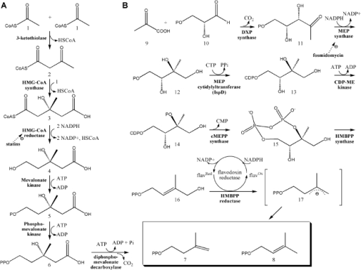 isolation and molecular characterization of phosphate Isolation and characterization of d- isolation and without any chemical modification that (1 : 25 w/v) of 50mm sodium phosphate buffer (ph.