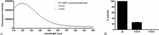 Regulation of F. tularensis MEP cytidylyltransferase.A) Intrinsic fluorescence spectra of MEP cytidylyltransferase and two mutant derivatives. Wildtype and mutant (T141D and T141E) proteins were adjusted to 5 µM in 0.1 M Tris pH 7.5, 1 mM NaCl and analyzed using an excitation wavelength of 290 nm. The emission spectra was measured from 310 to 400 nm. The Em λmax of all three proteins was detected at 320 nm. Identical spectra indicate little structural change in the protein globular fold accompanies the introduction of either Asp or Glu. B) The relative activity of wildtype MEP cytidylyltransferase and the T141D and T141E mutants. Assays were performed in duplicate with 200 µM MEP and 200 µM CTP.