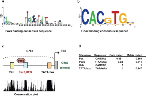 how to find transcription factor binding sites in promoters