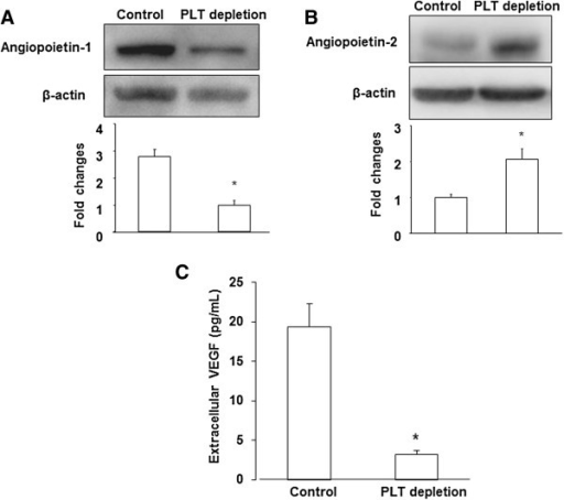 Platelets changed intratumoral levels of angiogenic factors. (A), (B) Western blot analysis of Angiopoietin-1, 2 expression in tumors from control and PLT-depleted mice. Quantification of western blot analysis for each protein (normalized to β-actin). (C) Microdialysis was used to sample extracellular proteins in vivo. Extracellular VEGF level was measured by ELISA as described in Materials and Methods. The results are expressed as the mean ± SEM. * p < 0.05. (n = 6 for each group).