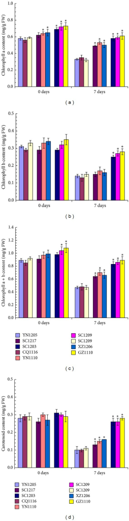 Comparison of chlorophyll a (a), chlorophyll b (b), total chlorophyll (c), and carotenoid (d) in leaves from nine selected C. dactylon accessions in response to SO2 stress. Mean values are presented with vertical error bars representing the standard deviations (n = 3). The asterisk symbols indicate significant differences between SO2-sensitive accessions and SO2-tolerant accessions.
