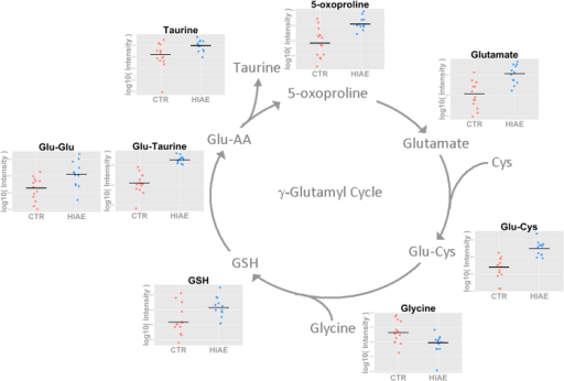 Identified and quantified metabolites involved in the γ-glutamyl cycle.The scatter plots show the abundance of individual metabolites in control and HIAE serum samples and trimmed mean (P < 0.05) (control in red and HIAE in blue). Glycine was measured by 1H-NMR and the other metabolites by LC-QqQ MS.