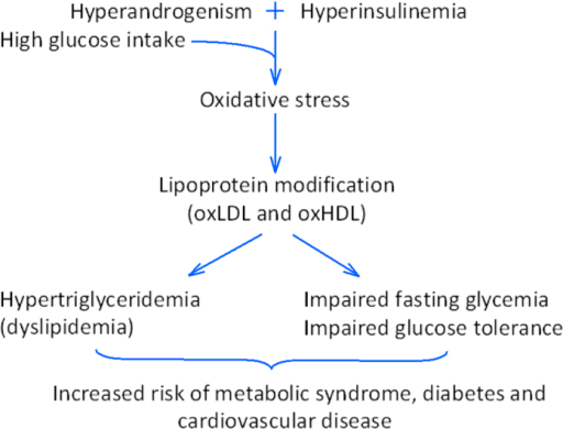 Proposed mechanism to explain the long-term health risks of hyperinsulinaemic androgen excess.Schematic representation of the underlying pathway by which HIAE is associated with long-term health risks, namely metabolic syndrome, diabetes and cardiovascular disease.