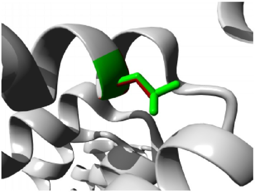 Close-up of the mutation L184S. The protein is colored grey; the side chains of both the wild type (Leucine) and the mutant (Serine) residue are shown and colored green and red, respectively.