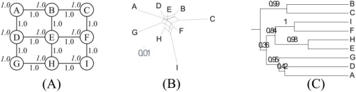 Grid.(A) Network topology. We set s = 4.0, b = 1.0 and d = 3.0. (B) NeighborNet. (C) Reconstructed tree.