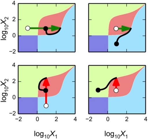 Basins of attraction for a 4-state genetic counter. The x-axis represents the logarithm of the concentration of the first activator, X1; the y-axis represents the logarithm of the concentration of the second activator, X2. Different colored regions represent values for the activators that converge to a unique steady-state attractor. Transitions from an initial steady state (white circle) to a new steady state (black circle) following an equal size bolus (275 μM) in one of the two activators. The top panels show transient simulations following a bolus of X1 (green arrows). The bottom panels show transient simulations following a bolus of X2 (red arrows). Left and right sub-panels show the transitions from different initial steady-state attractors.
