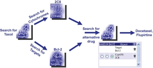 Example of a complex query: search for an alternative drug to Taxol, which adresses the same target Bcl-2, but is not metabolized by the cytochrome 2C8. Procedure: start to search for the targets and the metabolizing cytochromes of Taxol in the associated categories. The resulting lists contain among others the target Bcl-2 as well as the P450 cytochrome 2C8. Second, forward 2C8 and Bcl-2 into the query term box, combine them using the 'NOT' operator and submit the query. The resulting drug list contains two alternative drug candidates for Taxol (Docetaxel and Flupirtine).