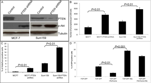 Knockdown of PTEN in breast cancer cell lines results in enrichment of breast cancer stem/progenitor cells via the Akt/GSK3-β/β-catenin pathway.(A) PTEN knockdown in MCF7 or SUM159 cells resulted in increased Akt phosphorylation as assessed by Western blotting. (B) PTEN knockdown resulted in increased secondary tumorsphere formation in MCF7 and SUM159 cells. (C) PTEN knockdown secondary tumorspheres contained an increased proportion of Aldefluor-positive cells as compared with the tumorspheres from parental lines. (D) Flow cytometry analyses of TOP-GFP-infected SUM159 tumorspheres treated with indicated inhibitors. Perifosine treatment decreased the proportion of GFP-positive cells by more than 50%, whereas Bio treatment increased the proportion of GFP-positive cells more than 2-fold and reversed the inhibitory effect of perifosine. Data represent the mean±SD of three independent experiments.