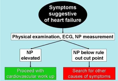 A suggested algorithm for evaluation of symptomatic patients.Clinical evaluation should be supplemented with natriuretic peptide measurement.