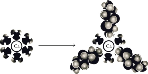 A simplified presentation of the competition between water and xylitol molecules for Ca, assumed to play a role in environments involving whole-mouth saliva and plaque fluid. Here, Ca has interacted with six water molecules which constitute the primary hydration layer of the metal ion (the actual number of water molecules surrounding the spherical Ca ion may vary from 4 to 12). The resulting new hydration layer consists of water molecules and xylitol molecules. This leads to stabilization of the salivary Ca phosphate systems [14, 18]. Reproduced with permission [14].