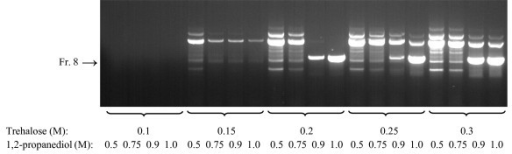 Amplification of medium-size GC-rich DNA fragment using whole blood as a source of the template. 806 bp fragment of human Q8N1R6 gene (73.3% GC) in heparinized human blood (2% final concentration) was amplified in PCR mix II containing various concentrations of trehalose (0.1 - 0.3 M) and 1,2-propanediol (0.5 - 1.0 M). Position of the specific product (Fr. 8) is shown by an arrow. A typical result of three independently performed experiments is shown.