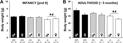 Body weight in Shank1 mice.(A) Body weight in pups tested for isolation-induced ultrasonic vocalizations on postnatal day (pnd) 8. (B) Body weight in adult mice approximately 5 months of age. Black bar: Shank1+/+ wildtype littermate control mice; striped bar: Shank1+/− heterozygote mice; white bar: Shank1−/−  mutant mice. Data are presented as means ± standard errors of the mean. * p<0.050 vs. Shank1+/+; # p<0.050 vs. Shank1+/−.