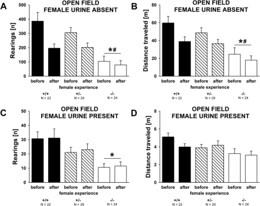 Open field activity in the absence and presence of female urine in adult male Shank1 mice.(A) Total number of rearings and (B) distance traveled during the 60 min habituation session to the clean open field without female urine displayed by male subjects before they had an experience of social interactions with a female, and 7 days after they had a 5 minute experience of social interactions with a female. (C) Total number of rearings and (D) distance traveled during the 5 min test session in the same open field containing urine from a female C57BL/6J mouse displayed by male subjects before they had an experience of social interactions with a female and after female experience. Black bar: Shank1+/+ wildtype littermate control mice; striped bar: Shank1+/− heterozygote mice; white bar: Shank1−/−  mutant mice. Data are presented as means ± standard errors of the mean. * p<0.050 vs. Shank1+/+; # p<0.050 vs. Shank1+/−.