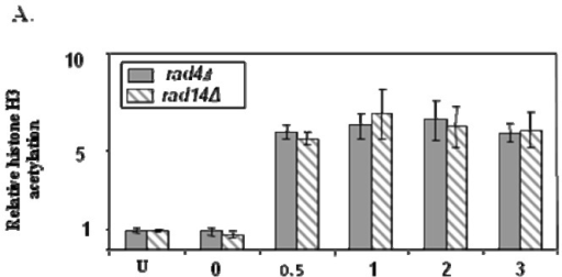 UV induced histone H3 acetylation (A) and the accessibility of the RsaI restriction site (B) within the MFA2 regulatory region post UV for NER defective rad4 and rad 14 mutants [16].