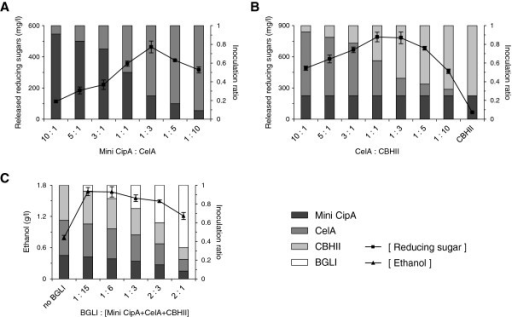 Optimization of the cellulosome and ethanol production activity by controlling the combination ratio of different cell populations. (A) The optimal ratio of mini CipA (cohesin) to CelA (dockerin). CelA was regarded as a representative of total cells harboring dockerin-fused enzymes. EBY100 cells displaying mini CipA and secreting CelA were combined at the indicated ratios, and the released reducing sugars from PASC were detected using the harvested cells. (B) The optimal ratio of CelA to CBHII. The optimal CelA:CBHII ratio for PASC hydrolysis was determined while fixing the amount of cells displaying mini CipA as 1/4 of total cells. (C) The optimal ratio of BGLI to cellulosome for ethanol production. The optimal amount of BGL1 for ethanol production was determined while fixing the mini CipA:CelA:CBHII ratio of 2:3:3. The bar graph represents inoculation portion of cells containing each plasmid. The square line graph represents released reducing sugars from PASC in each ratio. The triangle line graph represents ethanol concentration after three-day fermentation in each ratio.