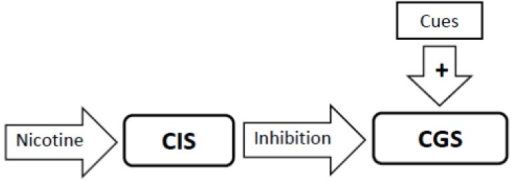 The primary addiction-related action of nicotine is to stimulate the Craving Inhibition System (CIS) which is experienced as a sense of satisfaction by the smoker. Stimulation of the CIS results in inhibition of the Craving Generation System (CGS) as indicated by the solid inhibitory arrow. This effect can block the ability of smoking cues to generate craving.