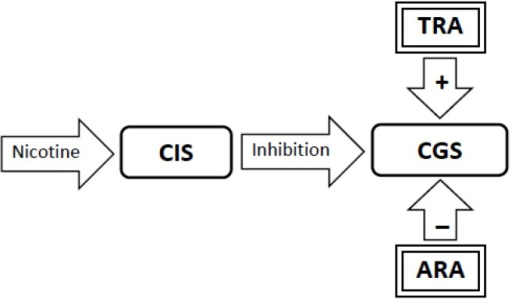 When an ex-smoker lapses and smokes a cigarette, nicotine stimulates the Craving Inhibition System (CIS) which delivers super-physiologic inhibition to the Craving Generation System (CGS), once again disrupting homeostasis in the CGS. The Abstinence-Related Adaptations (ARA) that provide inhibition to the CGS are now adding to the disruption of homeostasis rather than restoring it. The ARA are rapidly dismantled.