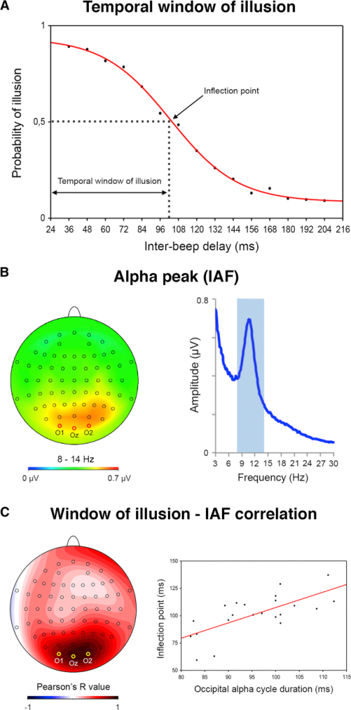 Individual Alpha Frequency Correlates with the Temporal Profile of the Double-Flash Illusion(A) Across-participants average probability of perceiving the illusion plotted as a function of interbeep delay. The red curve represents the sigmoid fit determining the amplitude of the window of illusion, corresponding to the inflection point of the sigmoid.(B) Across-participants average brain topography of oscillatory alpha activity during task performance and corresponding average FFT showing the peak frequency in the alpha band (light blue rectangle).(C) Scalp topography of the correlation index (Pearson's R) between individual inflection points and alpha peak frequency (IAF) at each electrode, showing maximal correlation (r = 0.697; p < 0.001) around occipital electrodes (O1, O2, Oz). Scatterplot of the significant correlation between each individual's inflection points (y axis) and the duration of one occipital alpha cycle (i.e., IAF; x axis).