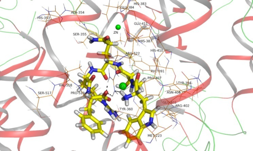 WTQRF binding with the active site of ACE, the conformation extracted from docking result.