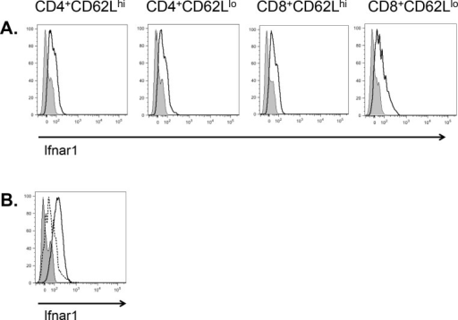 Th1 cells express the type I interferon receptor.A. Naïve (CD62Lhi) and effector (CD62Llo) CD4+ and CD8+ C57BL/6J T cells were assessed for surface expression of Ifnar1 by flow cytometry. Open histogram, Ifnar1; shaded histogram, fluorescence minus one (FMO) control. B. Th1 and Th17 cells were cultured and assessed for surface expression of Ifnar1 after 5 days. Solid line with open histogram, Th1; Dotted line with open histogram, Th17; shaded histogram, FMO control. Data representative of one of three experiments.