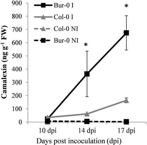 Camalexin content in infected (continuous lines) and non-infected (dashed lines) roots of the partially resistant accession Bur-0 and the susceptible accession Col-0 at 10, 14, and 17 dpi. Camalexin was quantified in root methanol extracts using UPLC-MS/MS, and is expressed as ng g−1 of fresh weight. Error bars represent standard error (three biological replicates, 12–54 plants analyzed per biological replicate). Asterisks indicate statistically significant differences according to the Wald tests applied on a linear mixed model (P < 0.05).