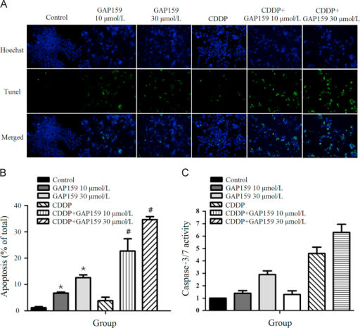 GAP159 enhances CDDP induced apoptosis. A: Co-treatment of GAP159 and CDDP induced apoptosis detected by TUNEL assay; B: quantification of TUNEL positive cells (⁎P<0.05 vs Control, #P<0.05 vs CDDP); C: the changes of caspase-3/7 activity in GAP159 and/or CDDP treated cells. The results are mean±SD of three individual experiments.