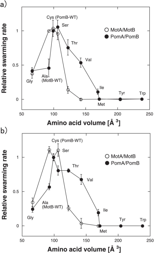 (a) Relationship between the volume of the side chain of introduced amino acid residues and the relative swarming size as estimated from Figure 2. Circles colored blue or red show the WT MotA/B and its mutants or WT PomA/B and its mutants, respectively. Three independent experiments were averaged. (b) Relationship between the volume of the side chain of introduced amino acid residues and the relative swimming speed of cells in TG medium for MotA/B expressing E. coli, or in TMN50 medium for PomA/B expressing V. alginolyticus. Circles colored blue or red show the WT MotA/B and its mutants or the WT PomA/B and its mutants, respectively. Three to 5 independent experiments were averaged.