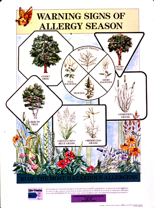 <p>Multicolor poster with black lettering.  Title at top of poster.  Visual image is an illustration of a flower bed that also contains several signs.  The signs are suggestive of road signs, except they feature several trees, grasses, and weeds.  Caption below illustration.  Offer for a booklet about allergens and publisher information at bottom of poster.  Poster also advertises Chlor-Trimeton, an allergy medication.</p>