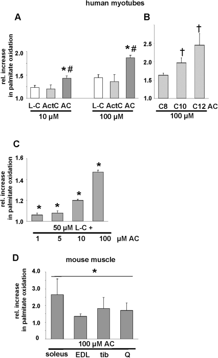 Effects of acylcarnitines on fatty acid oxidation in primary human skeletal muscle cells as well as soleus, extensor digitorum longus, tibialis and quadriceps muscles from mice.Oxidation of 3H-palmitate determined after 4 h in human myotubes in the presence of L-carnitine (L-C), acetylcarnitine (ActC), an equimolar mixture of C8:0-, C10:0- and C12:0-acylcarnitine (AC), or C8:0-(C8-AC), C10:0- (C10-AC) and C12:0-acylcarnitine (C12-AC) as indicated (A,B). Values of 3H-palmitate oxidation of control cells were set as 1. (C) Palmitate oxidation in the presence of 50 µM L-carnitine and 1, 5, 10 or 100 µM AC. Values of 3H-palmitate oxidation of cells solely incubated with 50 µM L-carnitine were set as 1; shown are means ± SEM from 4 independent experiments, * p<0.05 vs. L-carnitine; # p<0.05 vs acetyl-carnitine; † p<0.05 vs. C8-AC or C10-AC, respectively. (D) Oxidation of 3H-palmitate in mouse soleus, extensor digitorum longus (EDL), tibialis (tib) or quadriceps (Q) muscle from three different mice determined after 90 min in the presence of an equimolar mixture of C8:0-, C10:0- and C12:0-acylcarnitine as indicated. Shown are means ± SEM, values of 3H-palmitate oxidation in untreated tissues were set as 1, * p<0.05 vs. untreated tissues.