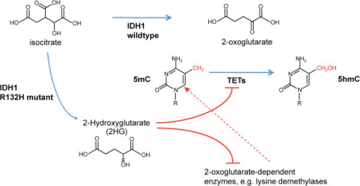isocitrate dehydrogenase