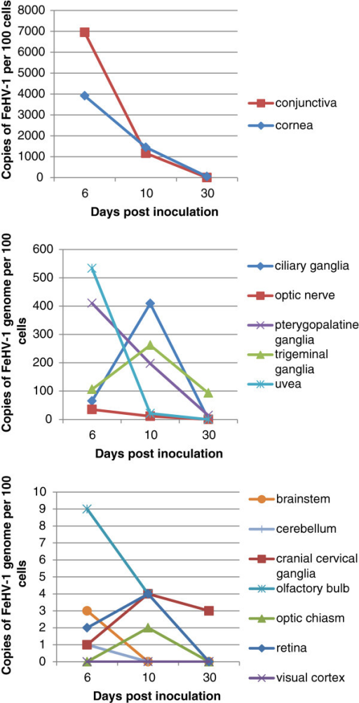 FeHV-1 copy number versus days post inoculation. The average number of copies of FeHV-1 genome per 100 cells was plotted against the days post inoculation. The FeHV-1 copy number decreases over time in most tissues sampled. However, the ciliary ganglia, trigeminal ganglia, cranial cervical ganglia, and optic chiasm had higher levels of virus present at day 10 than at day 6.
