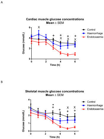 A) Myocardial and B) skeletal muscle glucose concentrations. t0 refers to baseline measurements prior to induction of endotoxemic or hemorrhagic shock. Significant decreases over time were seen in the myocardium during endotoxemic but not hemorrhagic shock compared to controls (P <0.001). There was a similar decrease in skeletal muscle during endotoxemic shock (P = 0.007) but not during hemorrhagic shock. Significant differences for individual time points are marked * for C versus H, + for C versus E, x for H versus E. C, control group; E, endotoxemic group; H, hemorrhagic group.