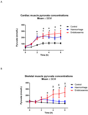 A) Myocardial and B) skeletal muscle pyruvate concentrations. t0 refers to baseline measurements prior to induction of endotoxemic or hemorrhagic shock. Significant increases over time were seen in myocardium in response to both endotoxemic and hemorrhagic shock compared to controls. In skeletal muscle increases in pyruvate over time were seen in endotoxemic shock (P = 0.003 compared to C group, P = 0.032 compared to H group), but no changes were seen during hemorrhagic shock. Significant differences for individual time points are marked * for C versus H, + for C versus E, x for H versus E. C, control group; E, endotoxemic group; H, hemorhagic group.